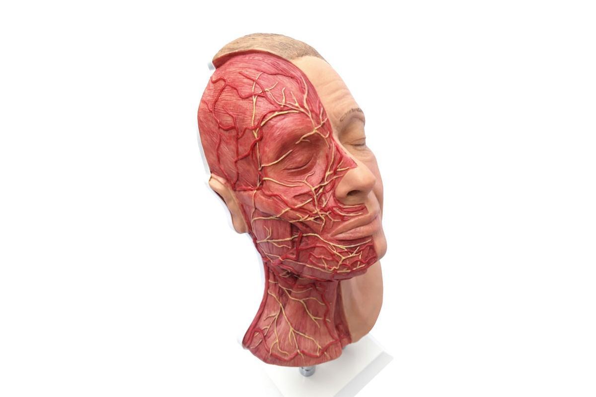simulador para inyecciones faciales con arterias